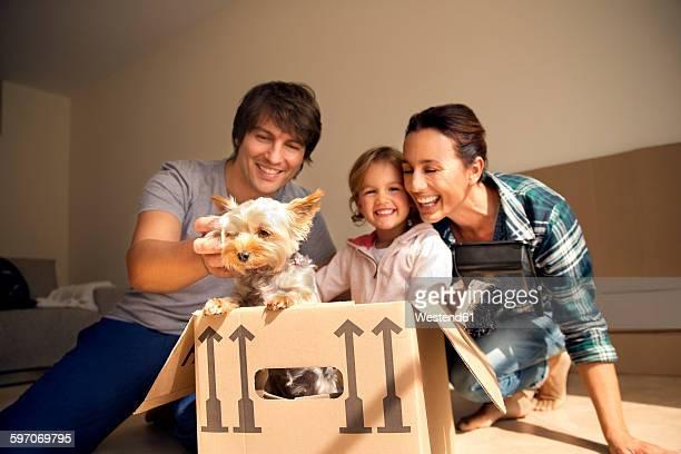happy family with dog inside cardboard box - 愛玩犬 ストックフォトと画像