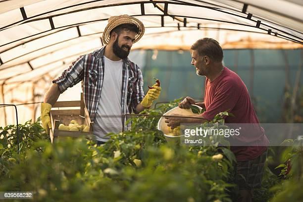 feliz trabalhadores rurais a dialogar no polietileno tunnel. - trabalhador rural - fotografias e filmes do acervo