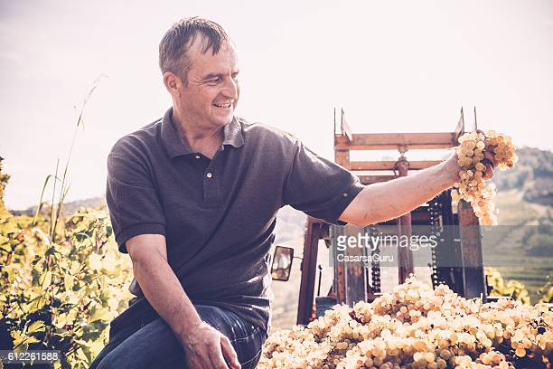 Happy Farmer Checking White Grape Crop
