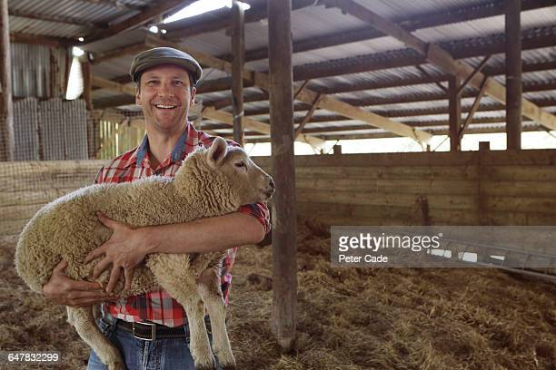 Happy farmer in barn holding sheep