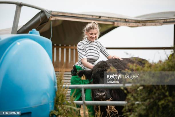 happy farmer taking care of cattle - female animal stock pictures, royalty-free photos & images