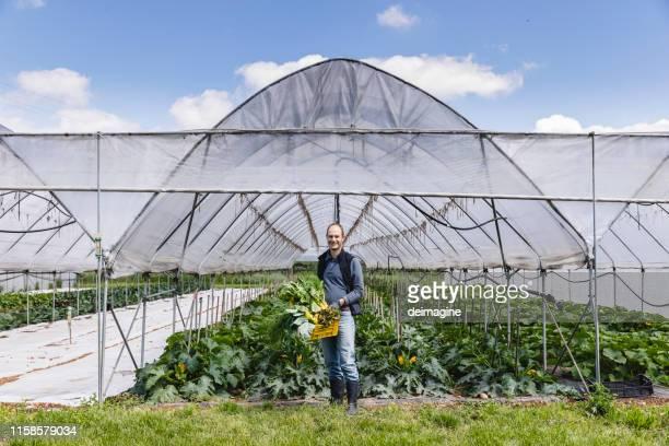 happy farmer met groente mand - milieukwesties stockfoto's en -beelden