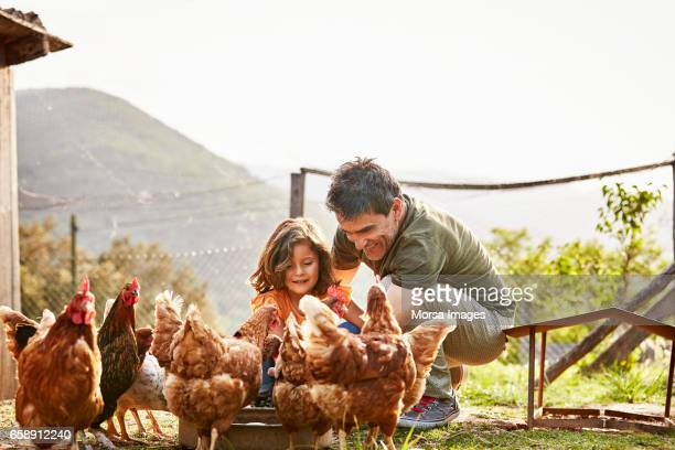 Feliz padre e hija alimentación de gallinas en la granja