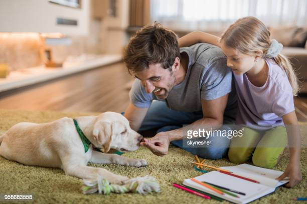 happy father and daughter feeding their puppy on carpet at home. - dog eats out girl stock photos and pictures