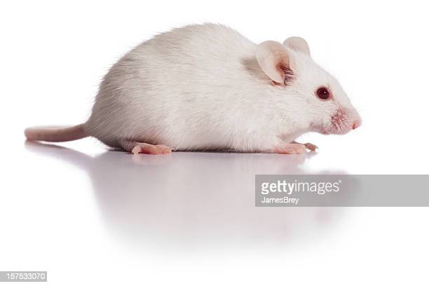 Happy Fluffy White Mouse