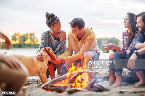 happy friends with dog by campfire against river - utomhuseld bildbanksfoton och bilder