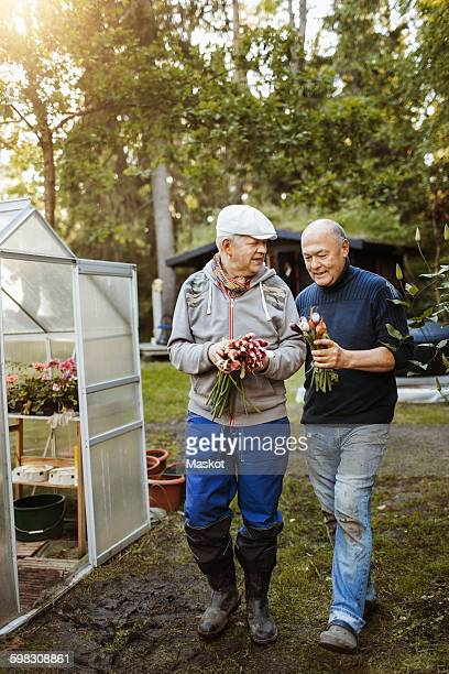 happy gay couple holding fresh root vegetables at garden - gay seniors photos et images de collection