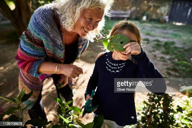 happy grandmother and granddaughter with leaf in garden - women wearing see through clothing stock pictures, royalty-free photos & images