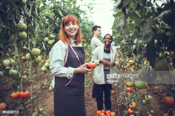 happy greenhouse - agricultural occupation stock pictures, royalty-free photos & images