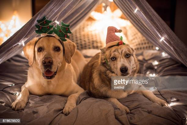 happy holidays - happy holidays stock photos and pictures