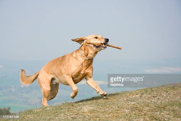 Feliz hound