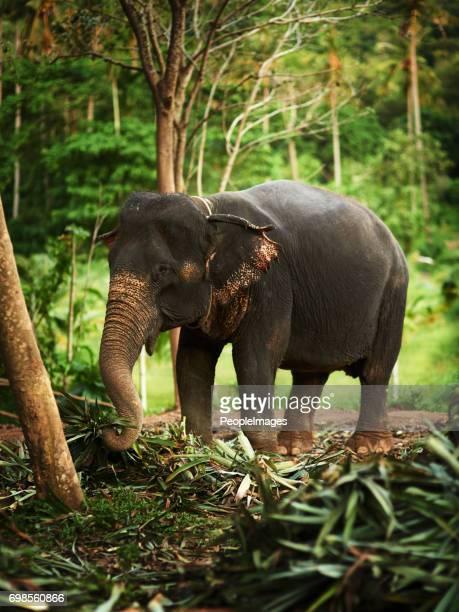 Happy jungle elephant