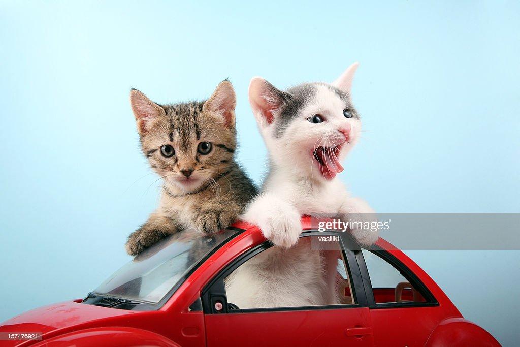 Happy kittens on vacations : Stock Photo