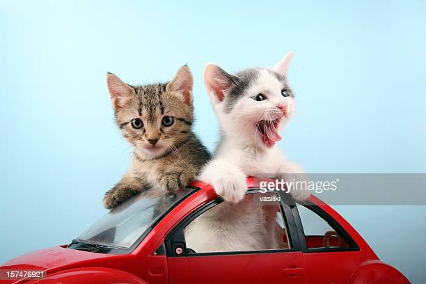 Happy kittens on vacations