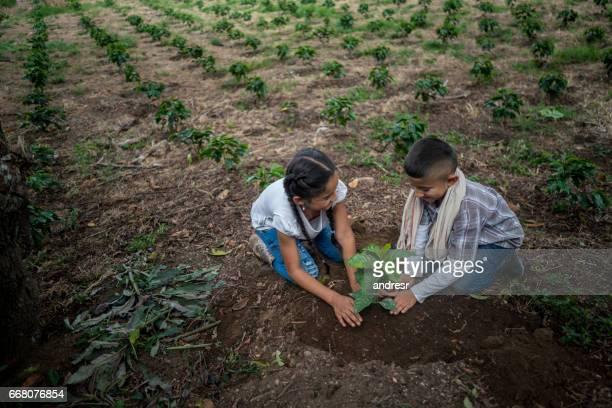 felizes crianças latino-americanas, plantando uma árvore na fazenda - latino americano - fotografias e filmes do acervo