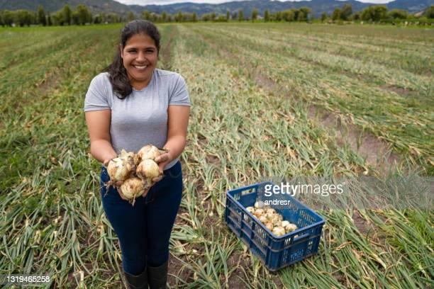 gelukkige latijns-amerikaanse vrouw die uien bij een landbouwbedrijf oogst - colombia land stockfoto's en -beelden
