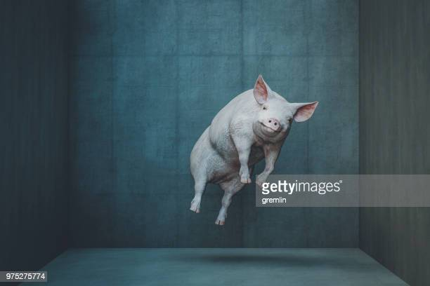 Happy levitating pig