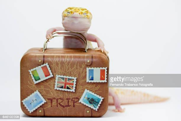 Happy lizard and smiling carrying a suitcase because he is going on vacation