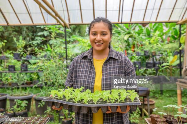 happy malaysian farmer holding a seedling tray - indonesia stock pictures, royalty-free photos & images