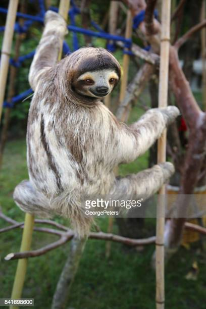 Happy Male Sloth