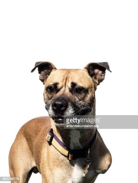 Stativ-Hund