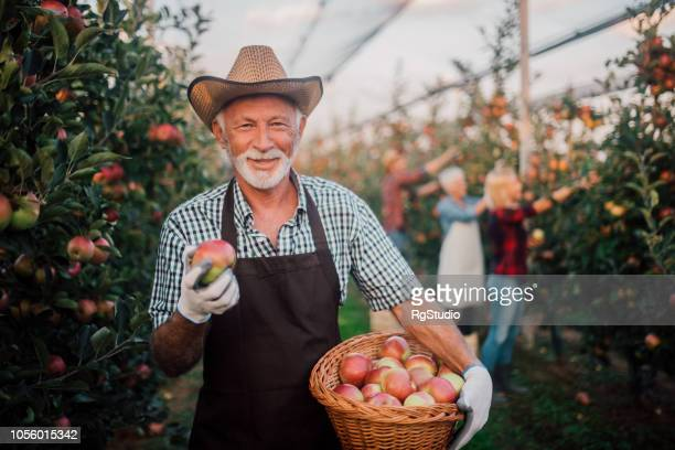 Happy man holding a basket of apples