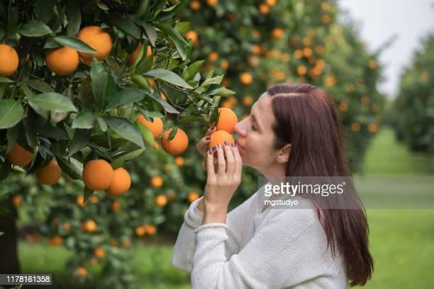 mulheres maduras felizes no pomar alaranjado - orange farm - fotografias e filmes do acervo