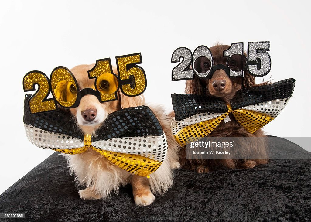 happy new year dog stock photo