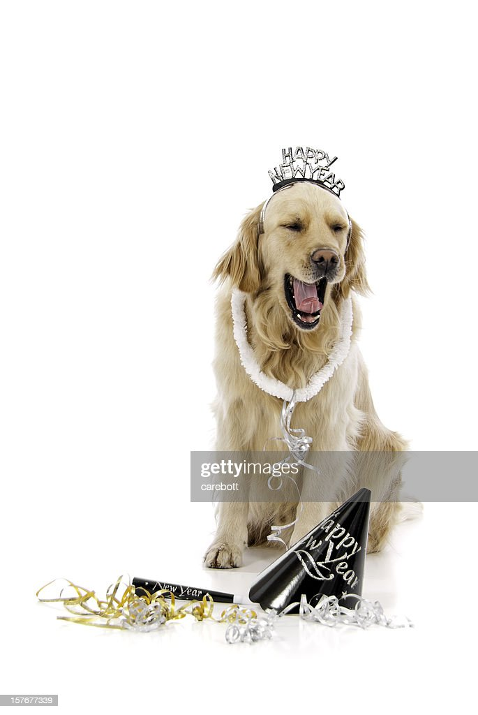 Happy New Years Golden Retriever Stock Photo Getty Images