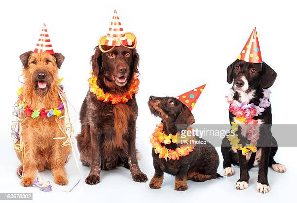happy party dogs - medium group of animals stock pictures, royalty-free photos & images