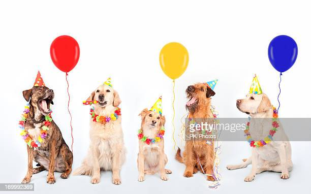 Happy Party Dogs