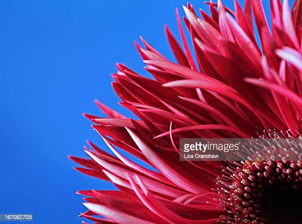 happy - lisa cranshaw stock pictures, royalty-free photos & images
