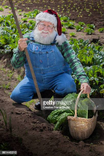 Happy Santa Claus harvesting his vegetable garden holding his stick and wicker basket