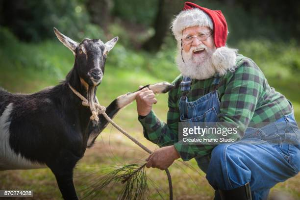 happy santa claus holding hands with a goat - country christmas stock pictures, royalty-free photos & images