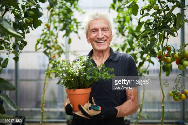 happy senior man with potted plant in greenhouse - active lifestyle stock pictures, royalty-free photos & images