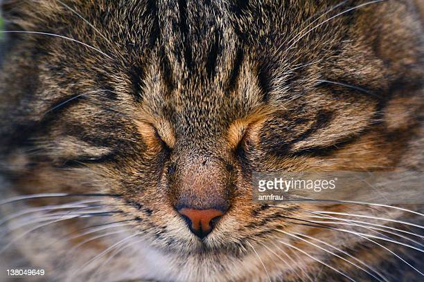 happy sleep - annfrau stock photos and pictures