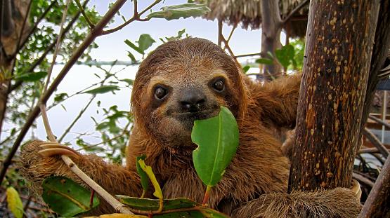 Happy sloth 863568128