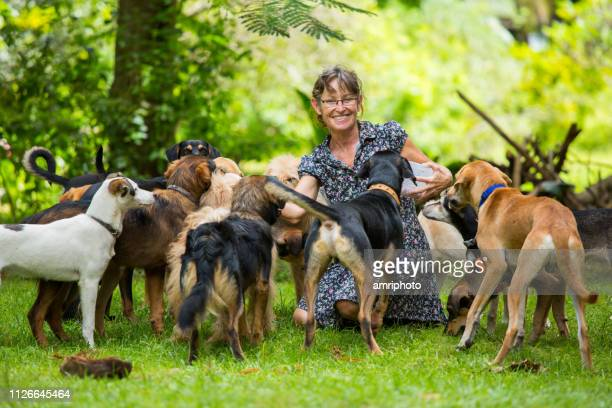 happy smiling woman with her pack of dogs in tropical garden - large group of animals stock pictures, royalty-free photos & images