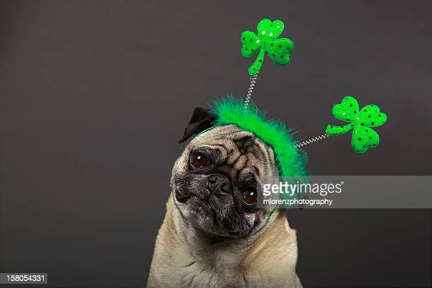 happy st. patrick's day! - st patricks day stock pictures, royalty-free photos & images