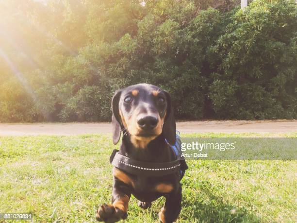 create your own dog tag stock photos and pictures getty images