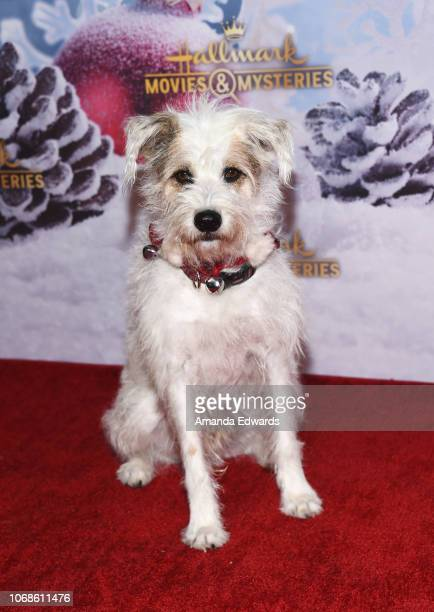 Happy the Dog arrives at the Hallmark Channel 'Once Upon A Christmas Miracle' screening and holiday party at 189 by Dominique Ansel on December 4...