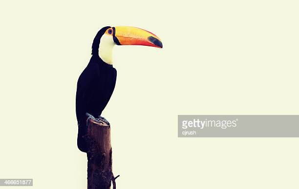 Happy Toucan