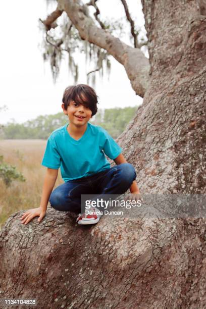 happy tree climber - children only stock pictures, royalty-free photos & images