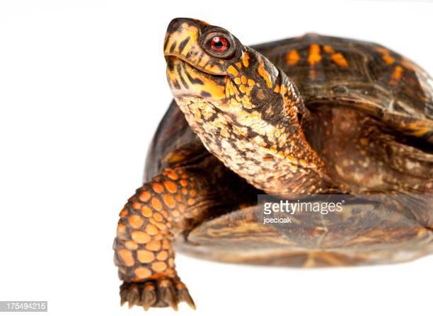 Happy Turtle Close Up