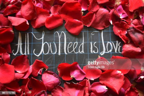 happy valentines day! text on blackboard on background of rose petals - animal internal organ stock photos and pictures