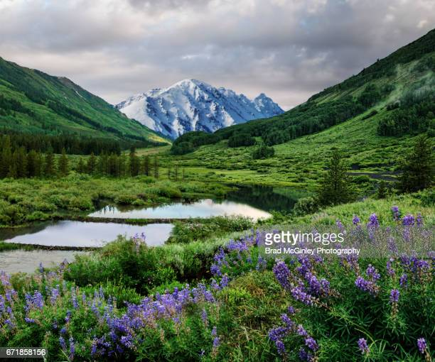 happy valley - beaver dam stock pictures, royalty-free photos & images