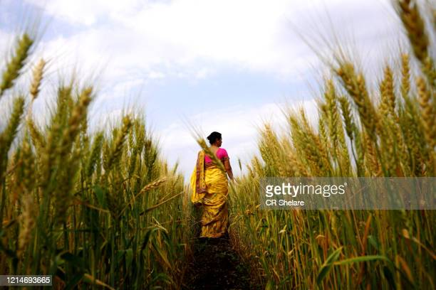 happy woman enjoying in the wheat field, nature beauty, golden wheat field, freedom concept. - india summer stock pictures, royalty-free photos & images
