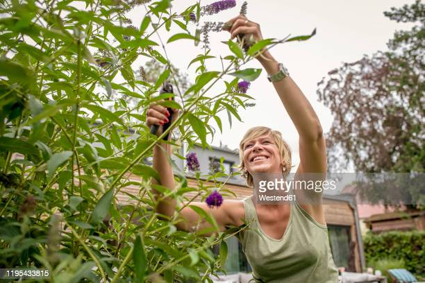 happy woman gardening pruning butterfly bush - ライラック ストックフォトと画像