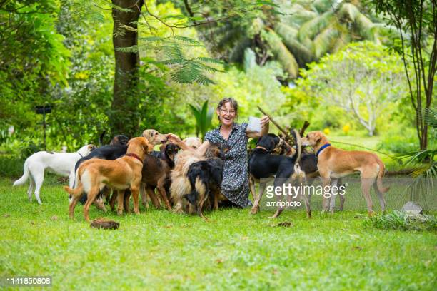 happy woman with her dogs - large group of animals stock pictures, royalty-free photos & images