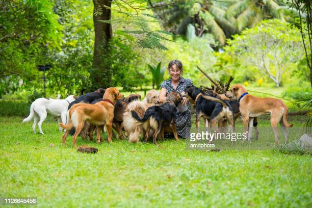 happy woman with her many lovely dogs in tropical garden - large group of animals stock pictures, royalty-free photos & images